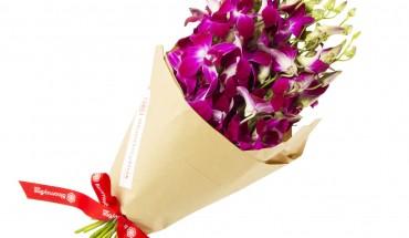Orchids Dendrobium Purple 4