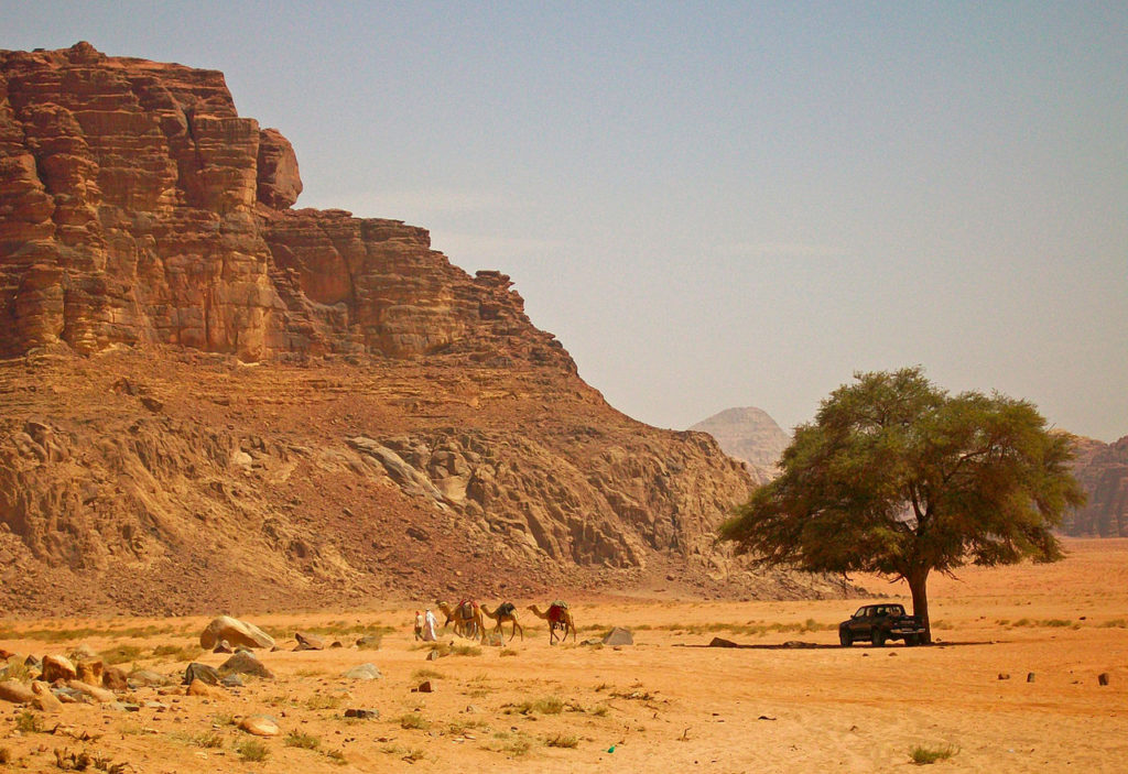 Tree_with_pickup_truck_and_camels_in_Wadi_Rum,_Jordan